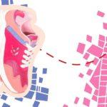 zapatilla combinada para niñas atomik 2020